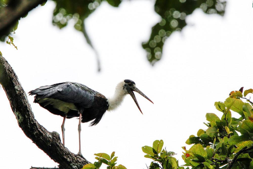 Chim ở vườn quốc gia Yok Don