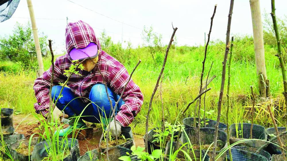 28 ngày không được tưới nước, chăm sóc, những cây tầm xuân trong vườn nhà chị Hương chết gần hết