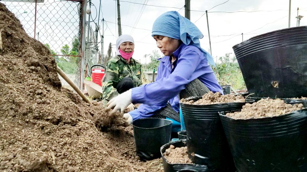 Bà Thảo, bà Hiền đi đóng bầu đất thuê, kiếm 300.000 đồng/ngày để vực lại những vườn hồng ốm o, bệnh tật