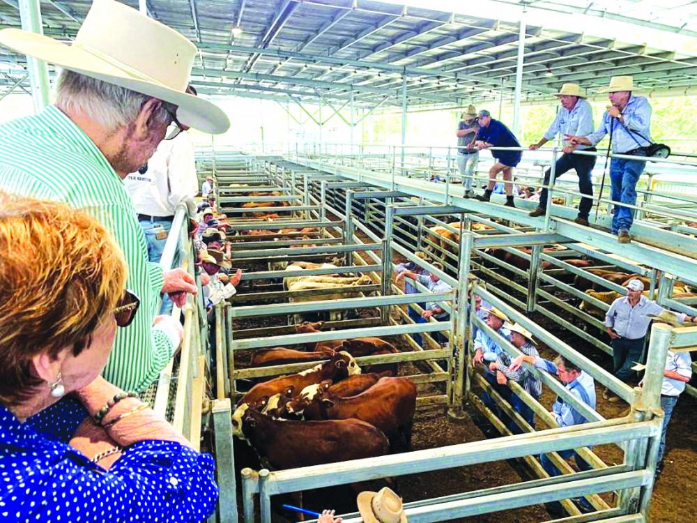 Thịt bò là mặt hàng nông nghiệp xuất khẩu lớn nhất của bang Queensland, Úc