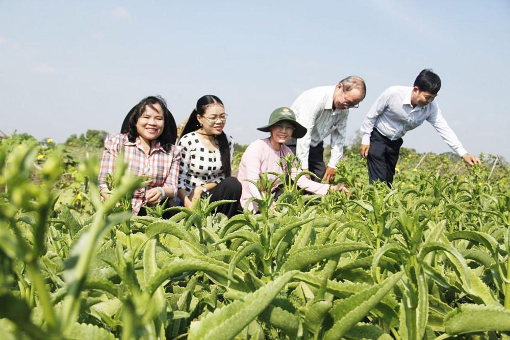 Trên cánh đồng rau sạch, an toàn ở xã Hưng Long, huyện Bình Chánh