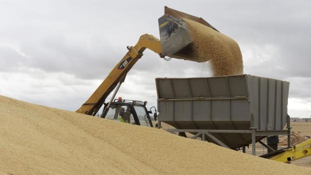 Trung Quốc tiêu thụ khoảng một nửa sản lượng lúa mạch xuất khẩu hằng năm của Úc.
