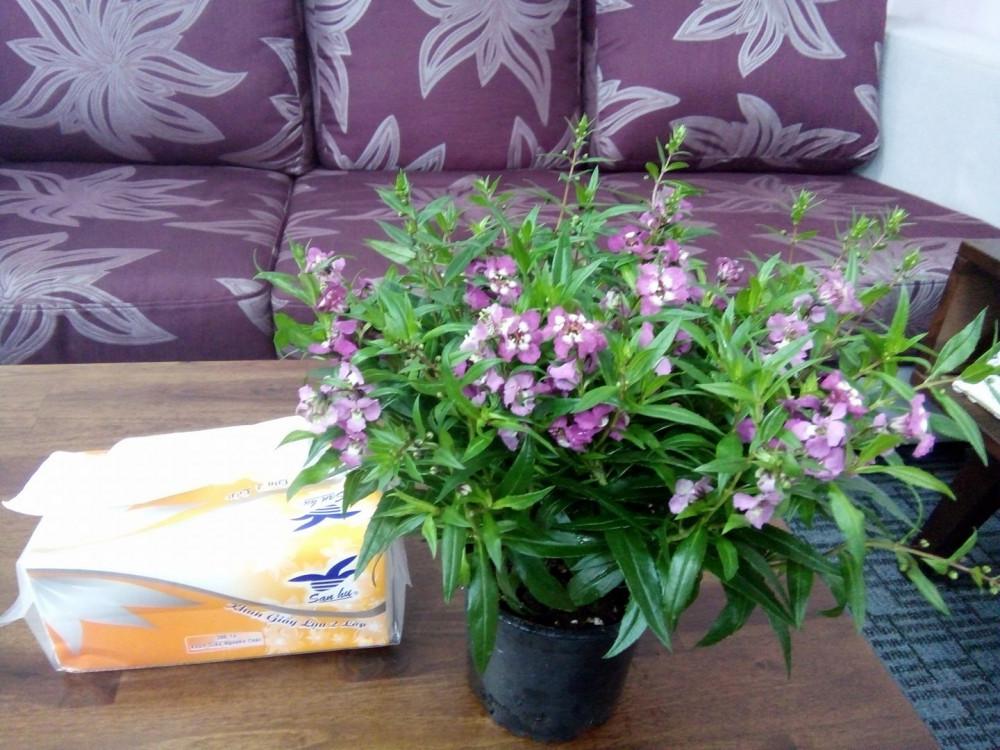 Trong phòng tư vấn Hạnh Dung luôn có hoa tươi và ánh sáng dịu mát