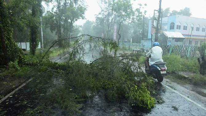 Cây cối bật gốc tại Digha, bang Tây Bengal, Ấn Độ.