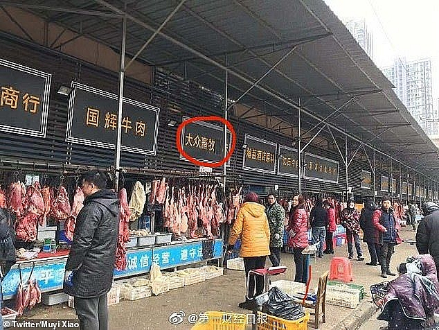 Một cửa hàng tại chợ Vũ Hán có bán động vật hoang dã, gồm chó sói, gấu túi và cầy hương. (Nguồn: Dailymail)