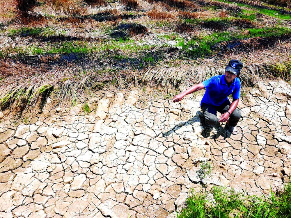 Ông Hồ Long - một nông dân xã Phong Sơn (huyện Phong Điền, tỉ nh Thừa Thiên - Huế) - ngồ i giữa thửa đất ruộng nứt nẻ do nắng hạn kéo dài - ẢNH: THUẬN HÓA