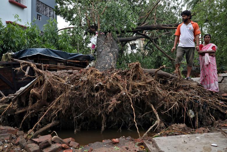 Những cây cổ thụ tại Kolkatar, Ấn Độ cũng chịu chung số phận.