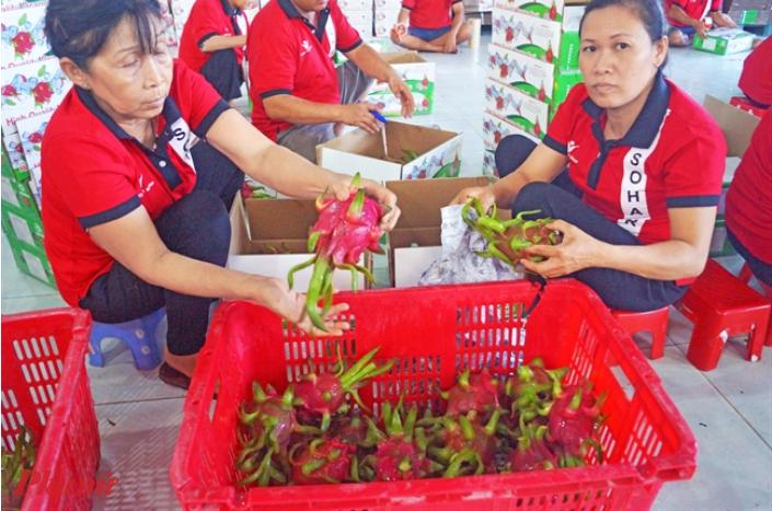 Thái Lan hiện chỉ cho phép nhập khẩu thanh long, xoài, nhãn và vải thiều Việt Nam