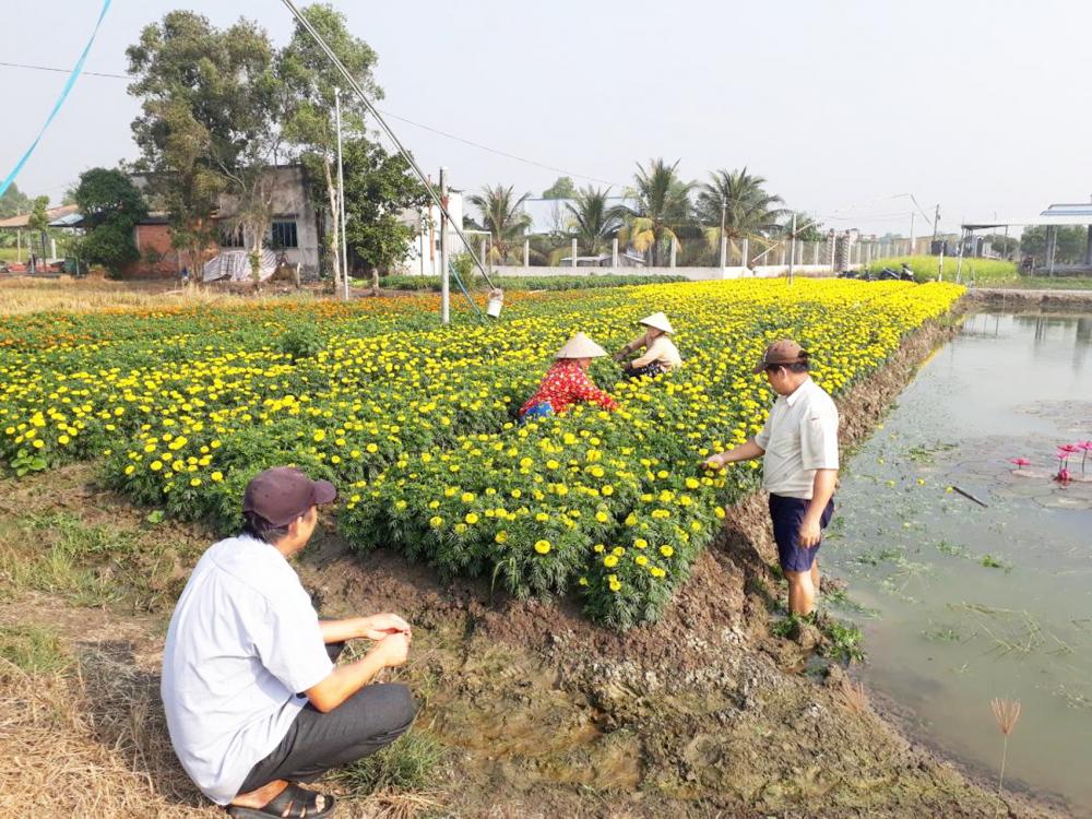Trồng hoa công nghệ cao tại xã Hưng Long, H.Bình Chánh