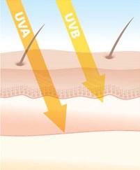 Tia UVB, UVA tác động gây tổn hại cho da
