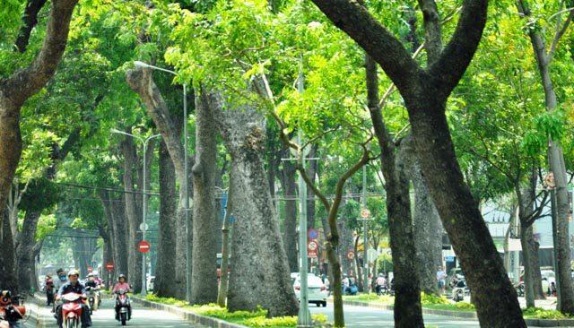 Tăng cường kiểm tra nhằm đảm bảo an toàn đối với cây xanh trên địa bàn thành phố