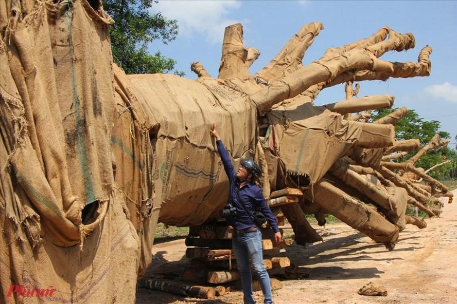 Sau khi ông ông Kiều Văn Chương (Hà Nội) cung cấp đầy đủ giấy tờ về nguồn gốc  cây này từ năm 2018 cây cổ thụ này đã được hạ tải ở khu đất nhà bà Lan cho đến nay