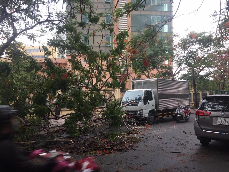 Người dân địa phương cho biết, dọc đường 297 trồng rất nhiều cây phượng 2 bên đường nên họ rất lo lắng, khi TPHCM đã bắt đầu vào mùa mưa.