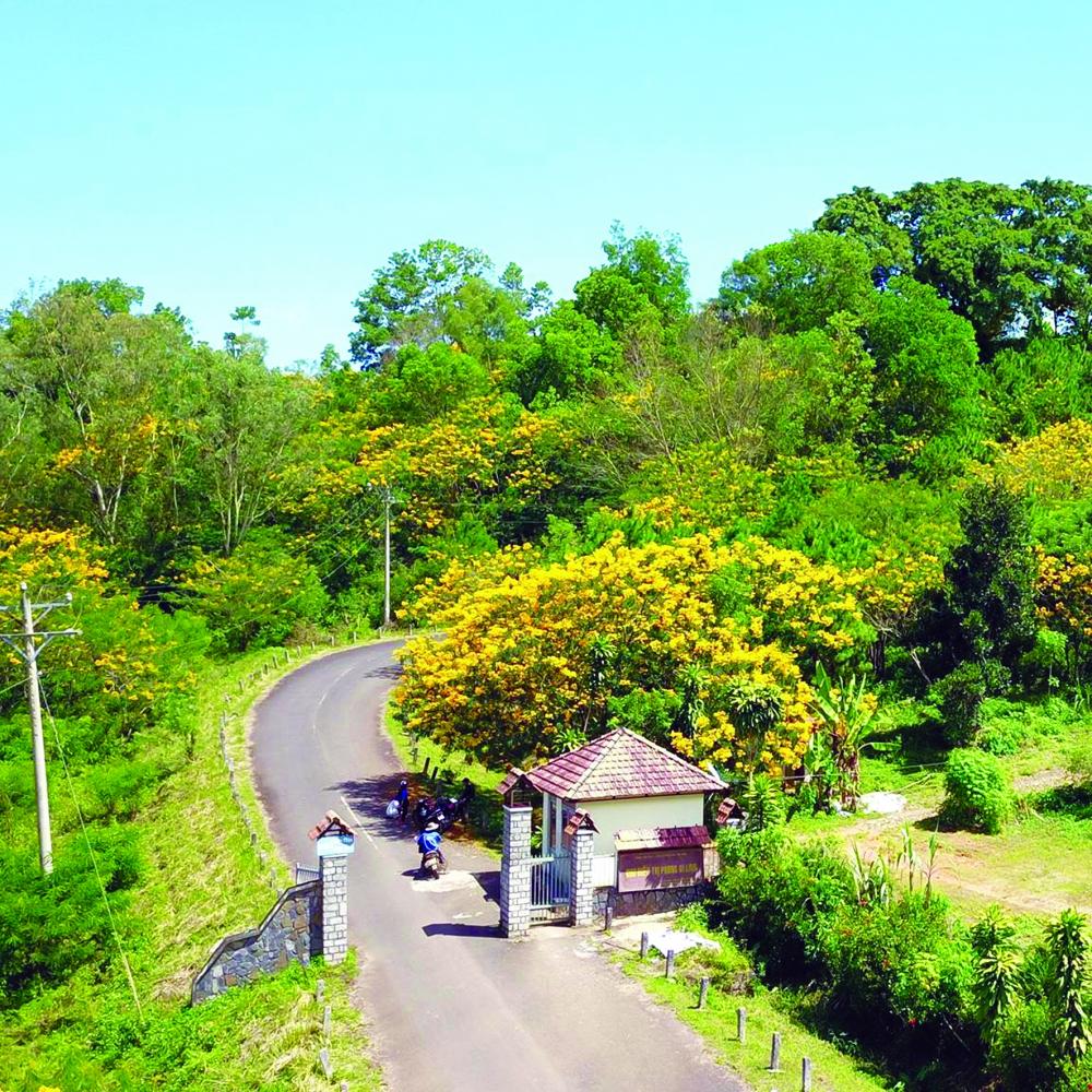 Đường vào trại phong (xã Bảo Thuận)