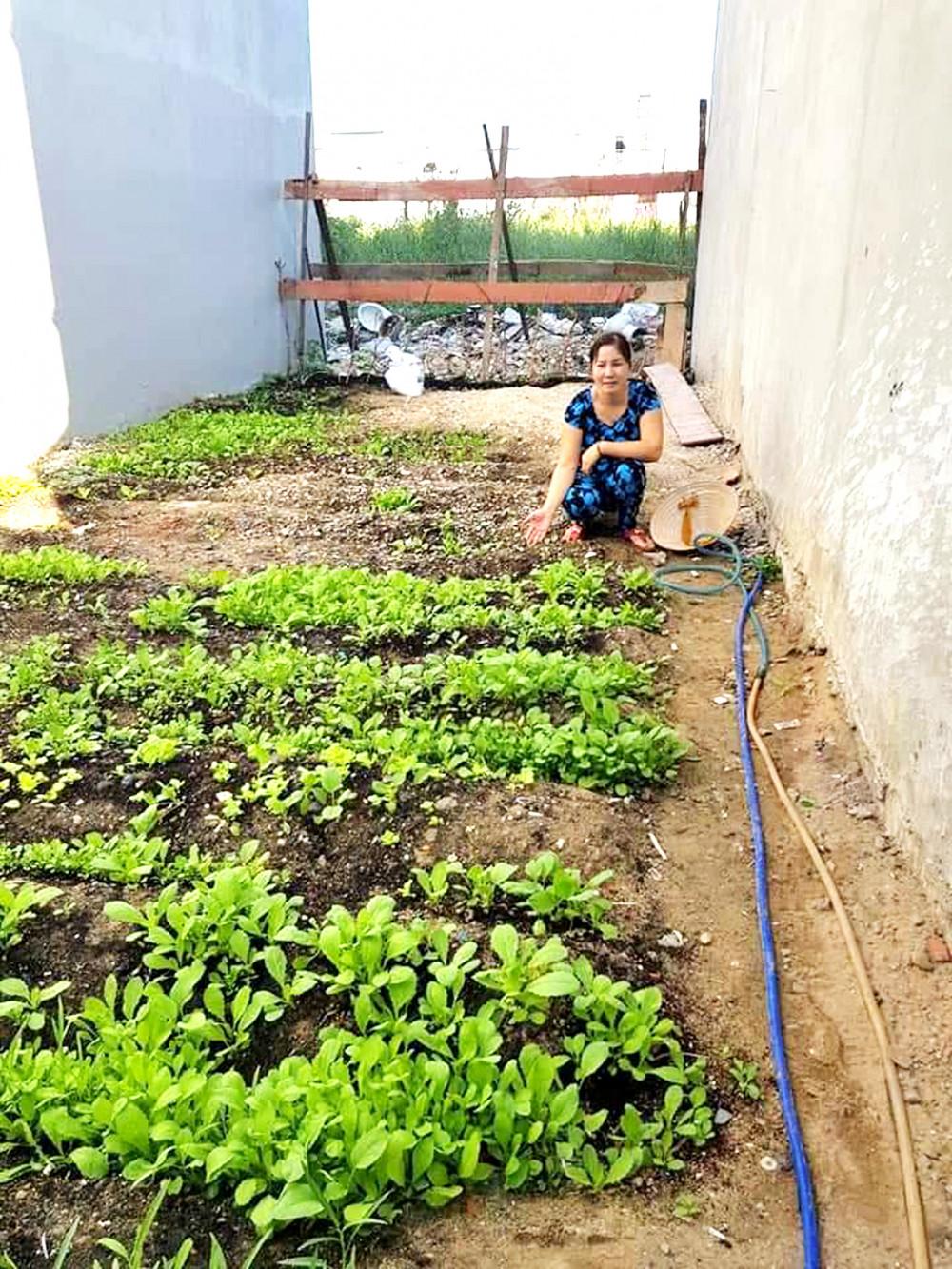 Mô hình vườn rau dinh dưỡng gia đình được Hội LHPN các quận huyện chú trọng phát triển trong suốt 7 năm qua