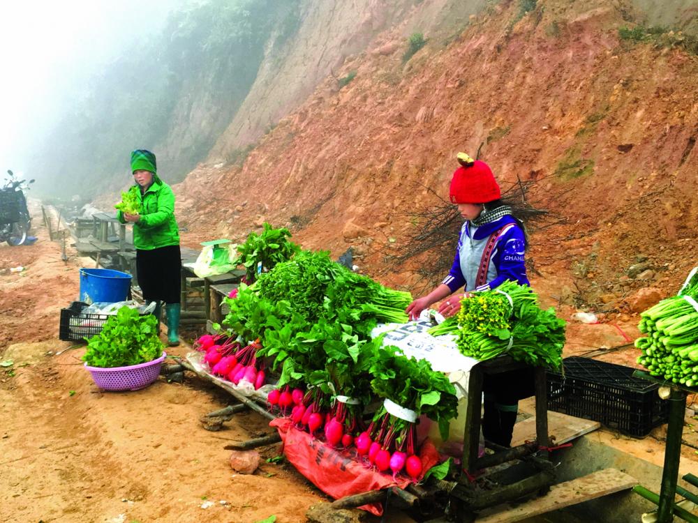 Lán chợ ven đường Lào Cai bán củ cải đỏ và rau mầm đá