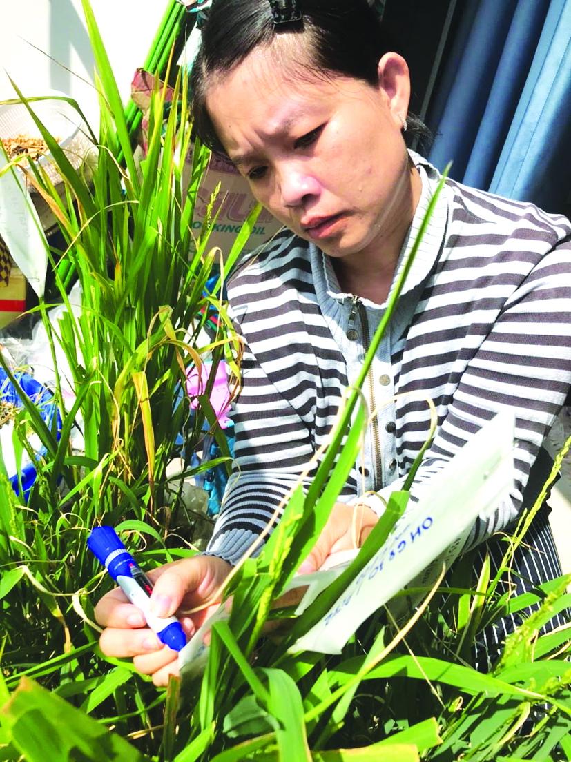 Điều đặc biệt nhất nơi tiến sĩ Phạm Thị Thu Hà là tình yêu bền chặt của chị với cây lúa, với người nông dân