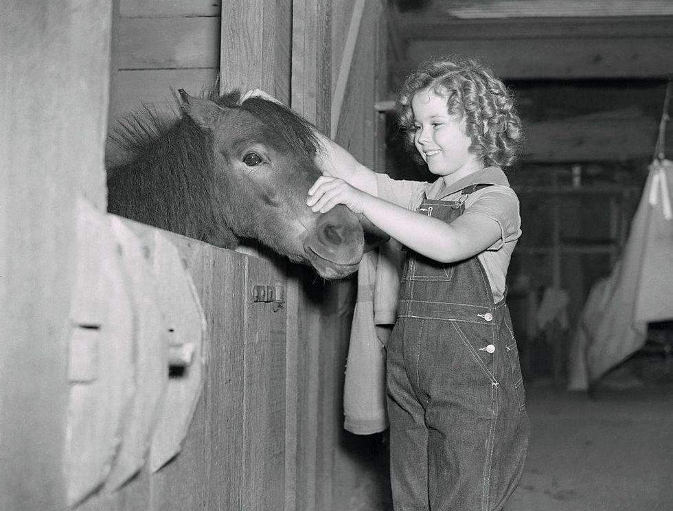 Shirley Temple mặc chiếc quần yếm Jean khi đến thăm chuồng ngựa. Ngôi sao nhí chụp ảnh với chú ngựa Little Carnation