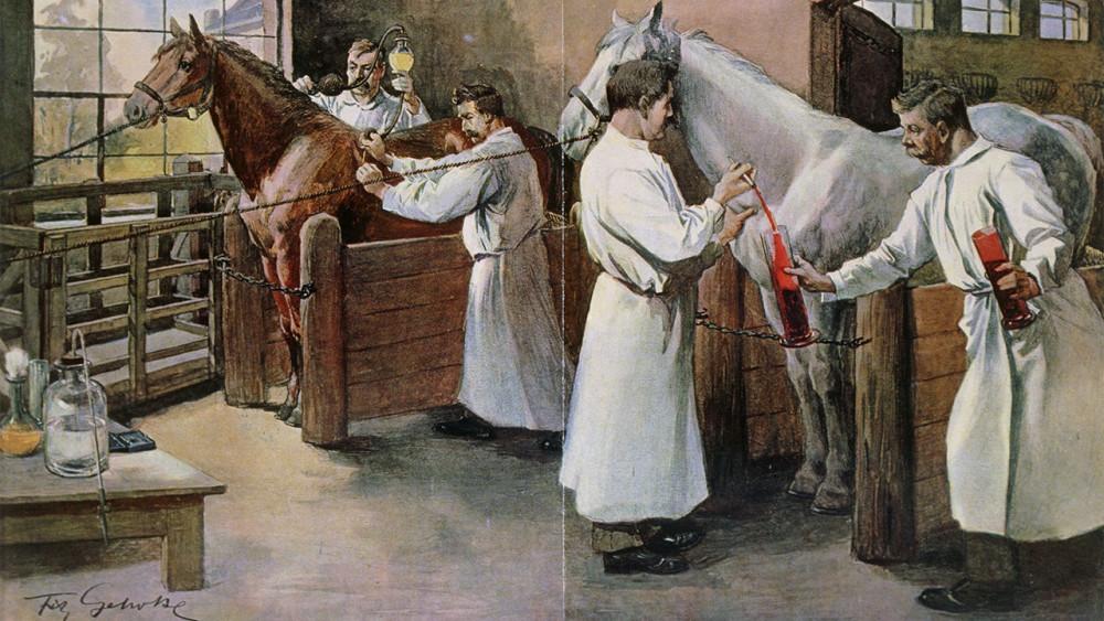 Việc sản xuất huyết thanh dùng làm vắc xin chống bạch hầu từ ngựa đã tồn tại hơn 100 năm.
