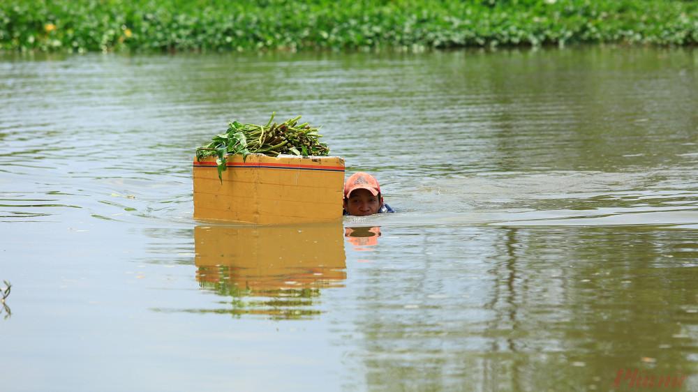 Cảnh những người hành nghề hái rau muống nước bới dưới sông đưa rau vào bờ.