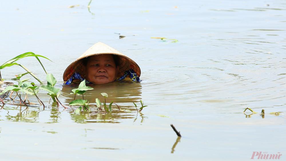 Không phải chỉ có nam giới mà cả phụ nữ cũng lặn ngập trong nước để hái rau.