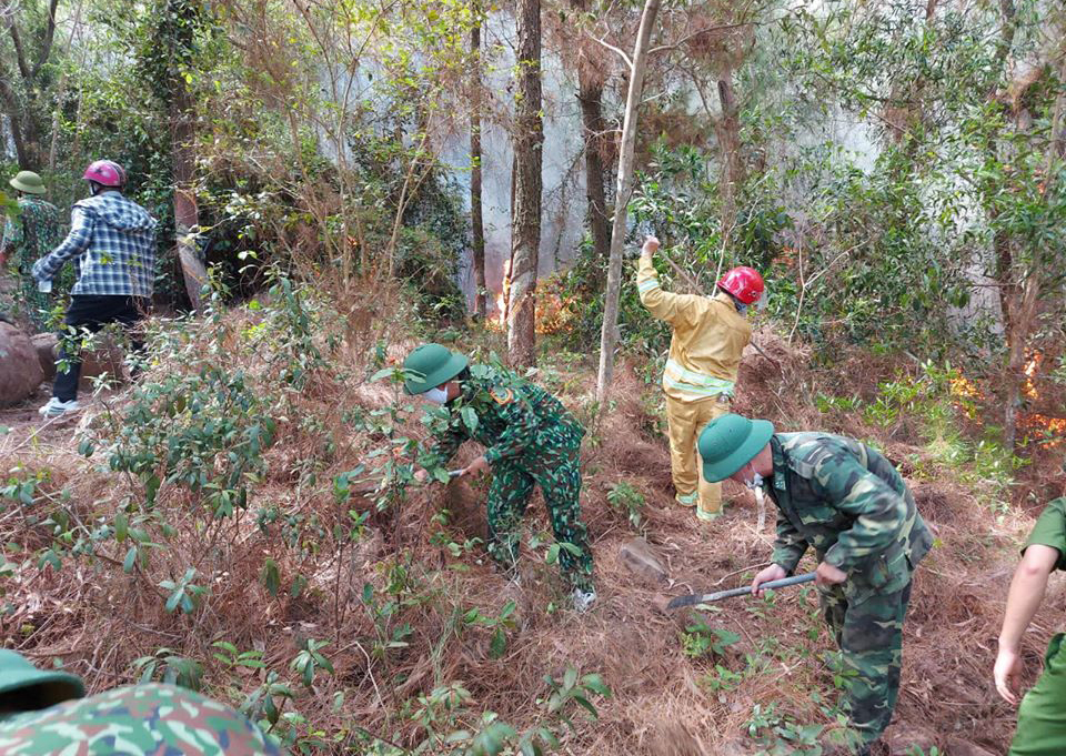 Lực lượng chức năng chặt cây, lập đường băng cản lửa