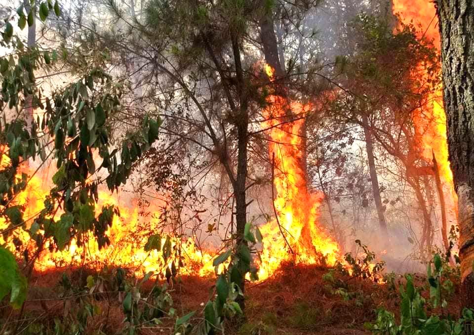 Ngọn lửa bùng phát rồi bốc cháy dữ dội giữa thời tiết nắng nóng