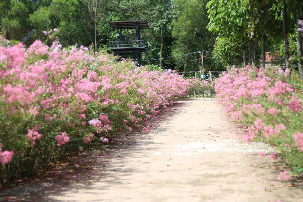 Con đường hoa tường vy mềm mại