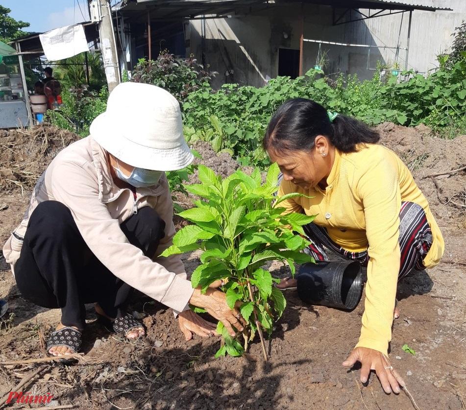 Tham gia trồng cây xanh trên các tuyến đường huyện nông thông của Thành phố