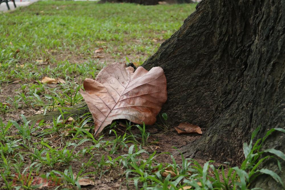 Những gốc cây già...