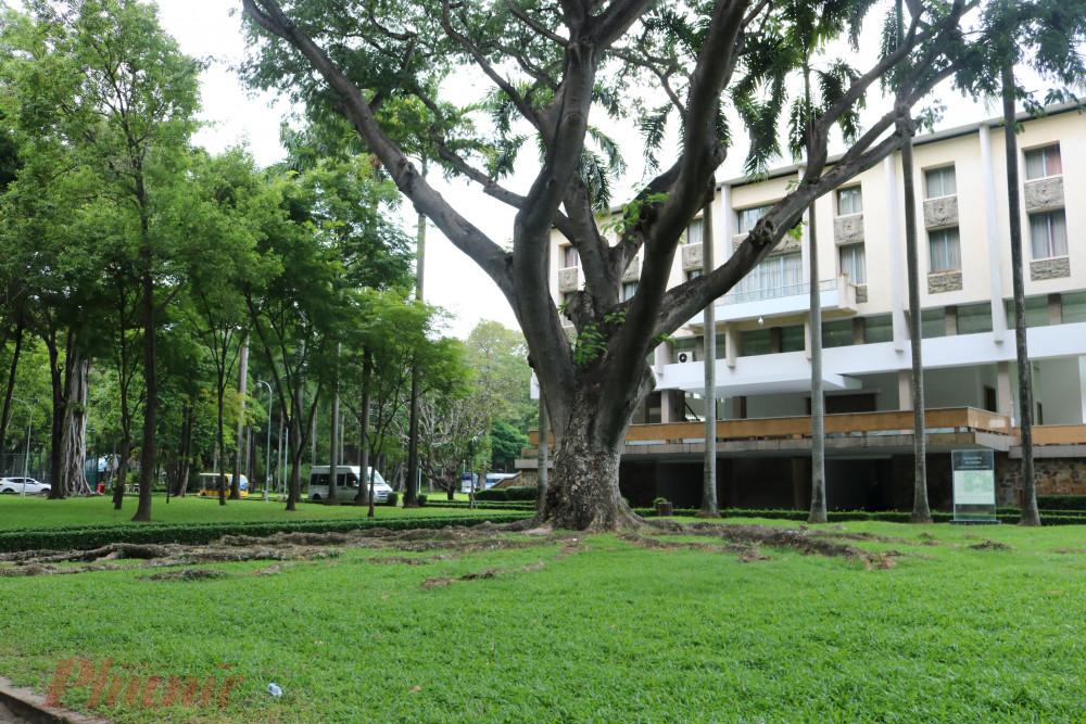 Rễ cây trăm năm