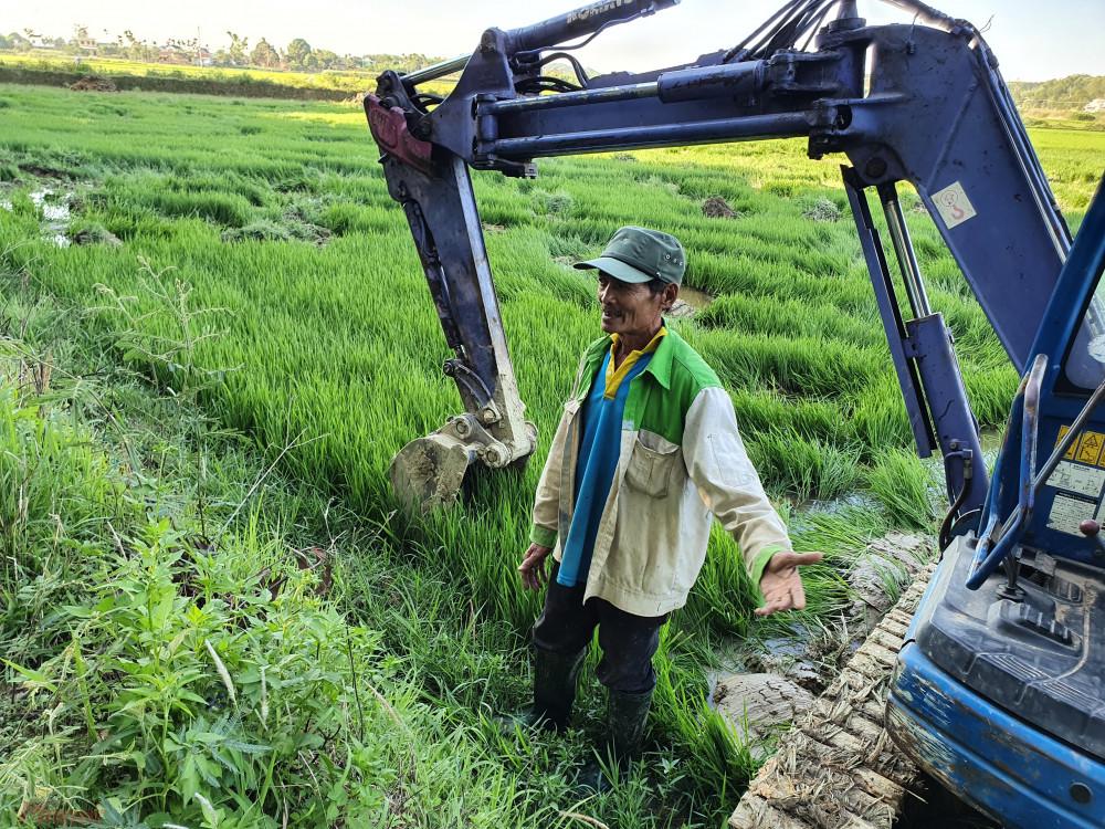 Ông Lê Minh Tâm xót xa trước đám ruộng lúa gần 2 tháng tuổi của mình bị máy càn không thương tiếc