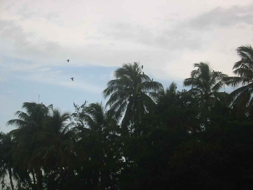 Những con cò bay về tổ trong trời chiều.