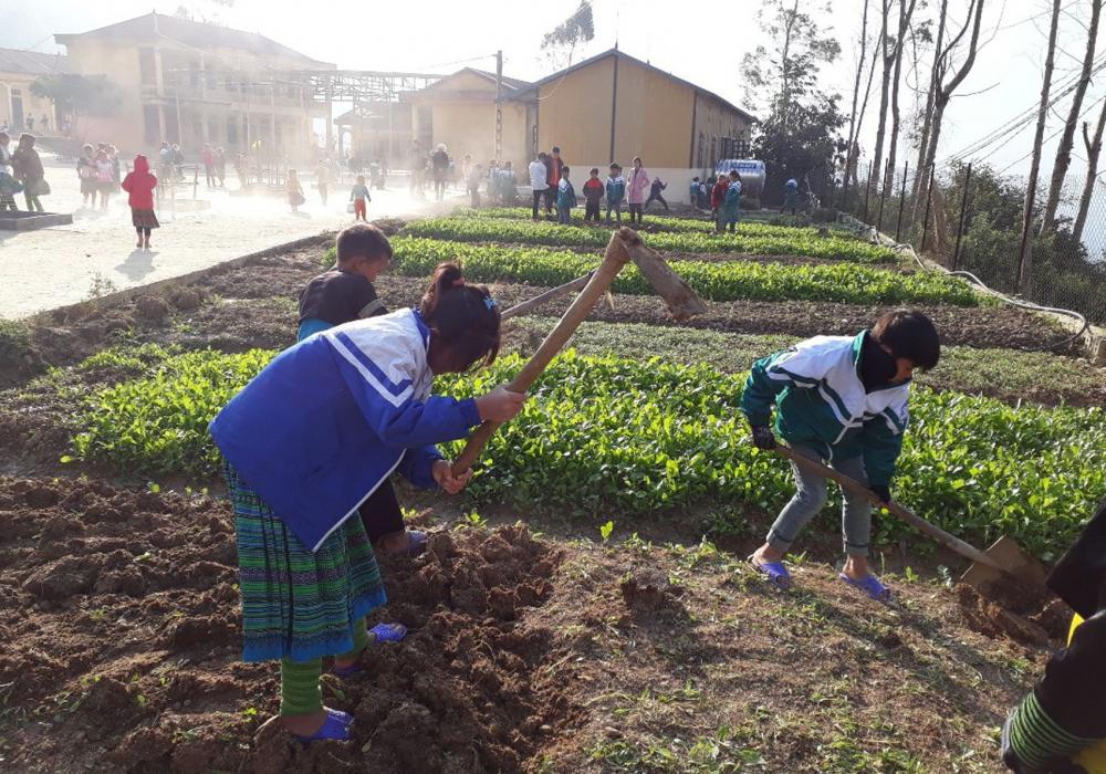 Hầu hết các trường bán trú vùng cao đều có những vườn rau do chính các em học sinh trồng, chăm sóc