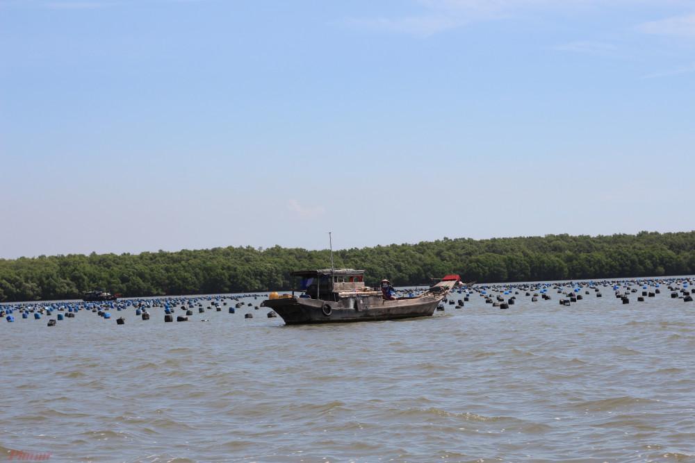 Làng nuôi sò huyết và hàu trên sông của người Cần Giờ.