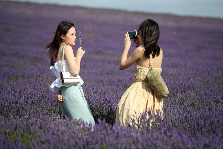 Những trang phục màu pastel được các cô gái chuộng diện đến những đồng hoa để có những bức ảnh đầy chất thơ.
