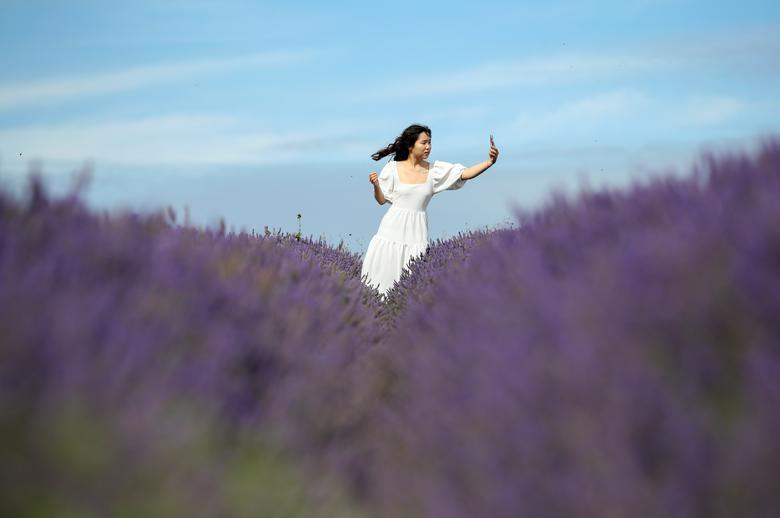 Một cô gái di chuyển một mình trên đồng hoa, chụp ảnh tự sướng.
