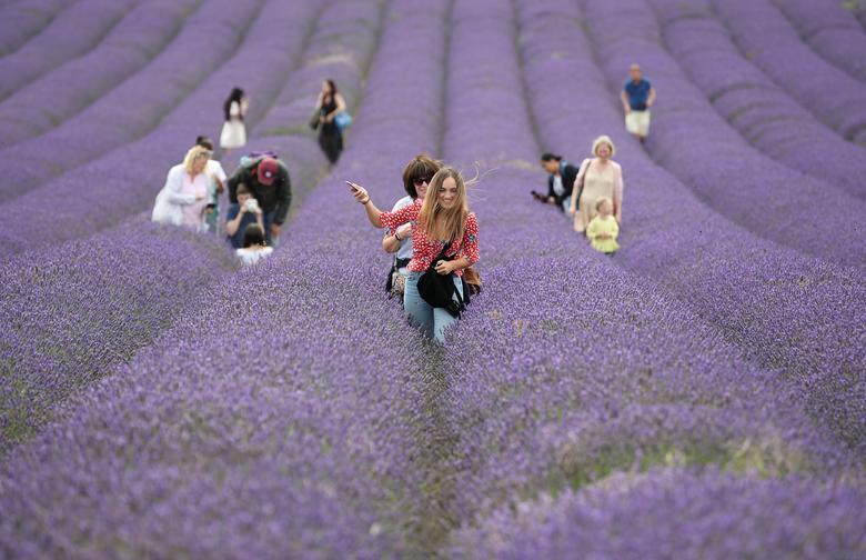 Tuy nhiên, du khách tham quan đồng hoa cũng có người không đeo
