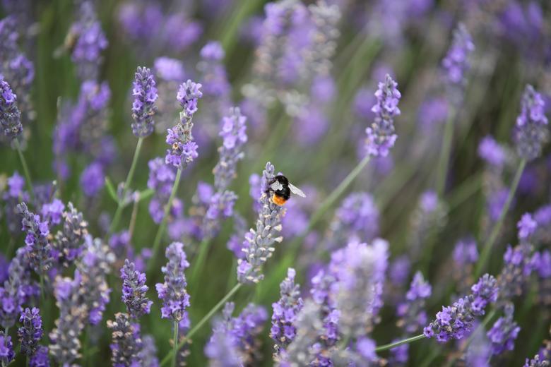 Khoảnh khắc tuyệt đẹp ở đống hoa được nhiếp ảnh gia của Reuters ghi lại.