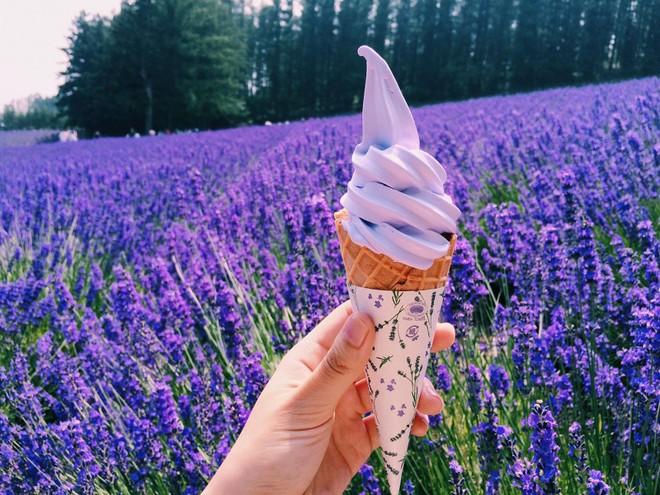 Ngoài phát triển du lịch ngắm hoa, vùng Hokkaido còn có loại kem oải hương trứ danh.