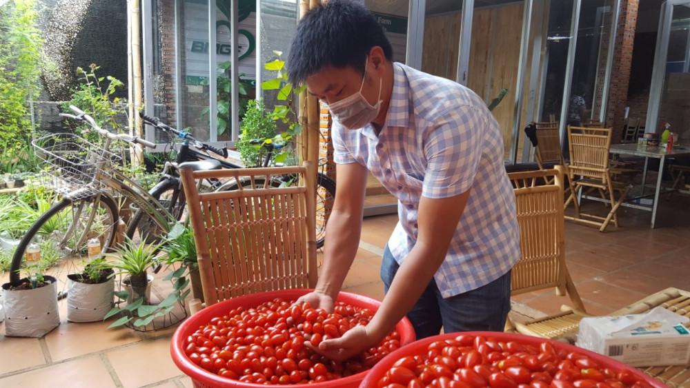 Cà chua trái cây do công ty chị Thanh trồng được chuẩn bị sẵn sàng để gửi ra vùng dịch