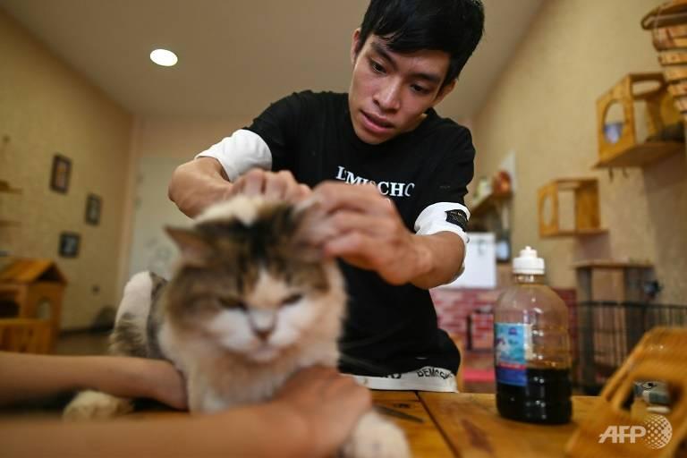 Bình đang chăm sóc cho một chú mèo trong quán