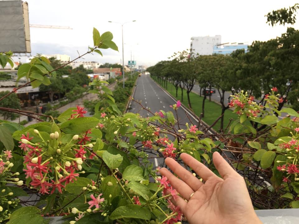 Dọc theo kênh Tàu Hũ, đại lộ Võ Văn Kiệt là những cây cầu vượt với hoa và các loài dây leo thơ mộng. Ảnh - T.Q