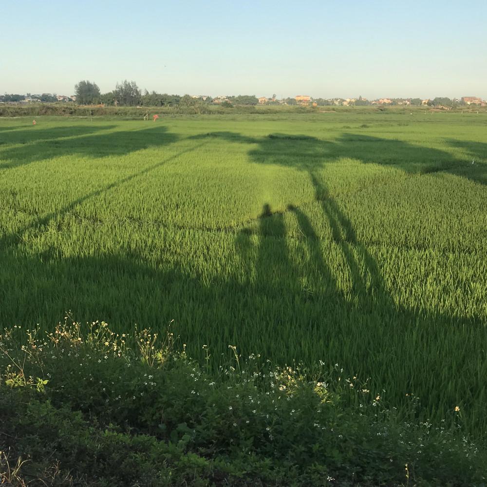 Tôi nhớ lúa quá nhiều trước khi tôi được gặp lúa mỗi ngày. Ảnh: nhân vật cung cấp