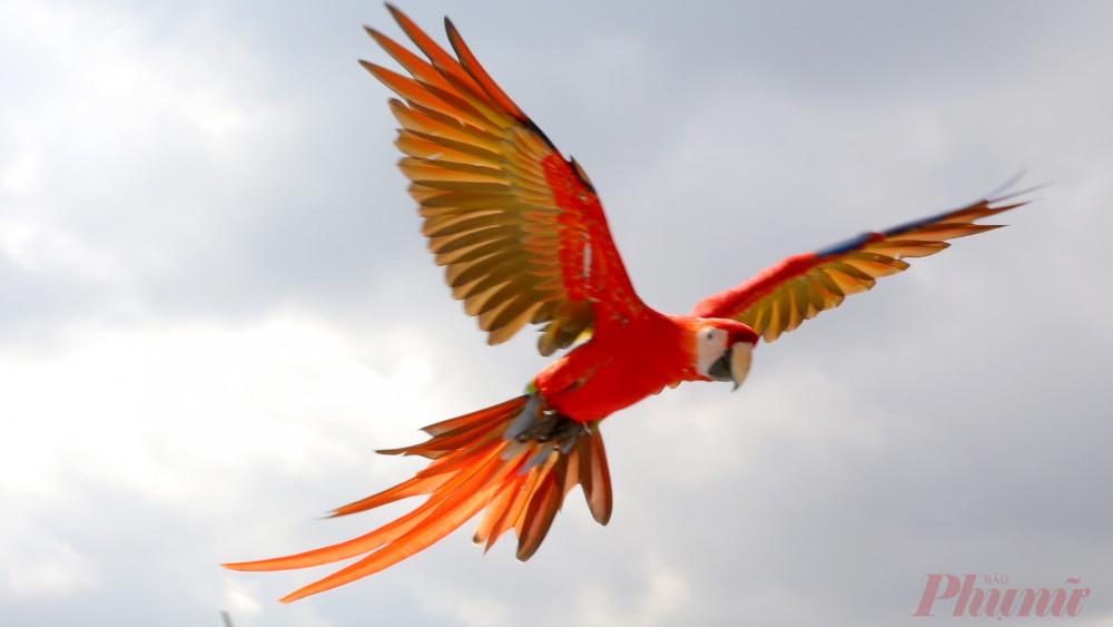 Những con chim bị nhốt lâu ngày thỏa sức sải cánh trên bầu trời.