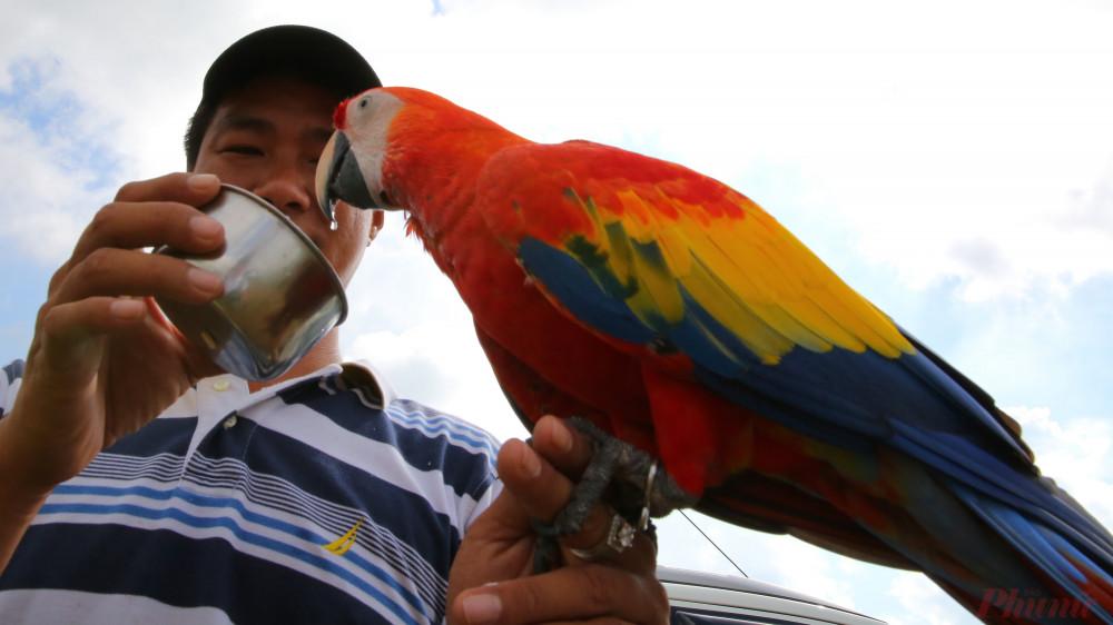 Để sở hữu một con vẹt Nam Mỹ người chơi bỏ ra từ 20 đến 40 triệu đồng mới sở hữu được chúng.