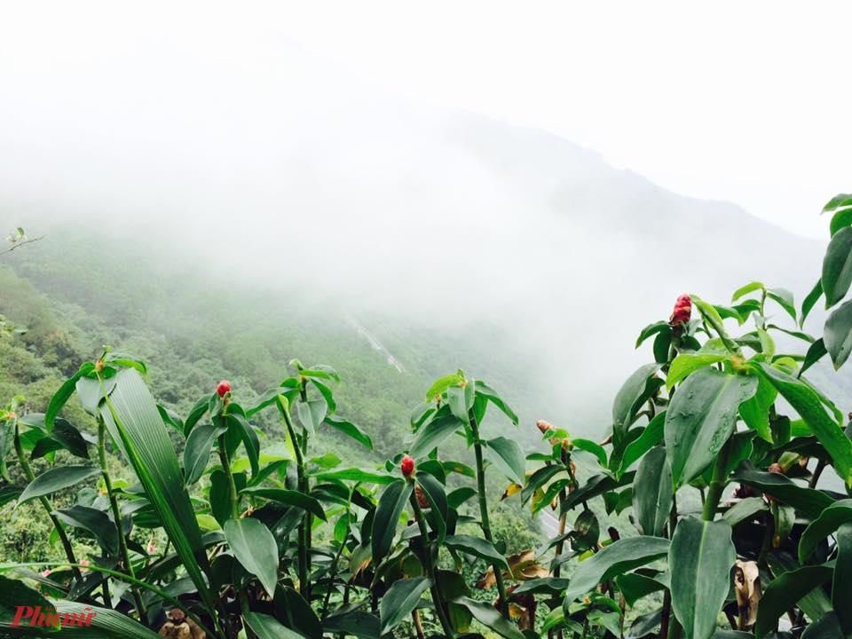 Sương mây bảng lảng, nhìn từ đèo Hải Vân.