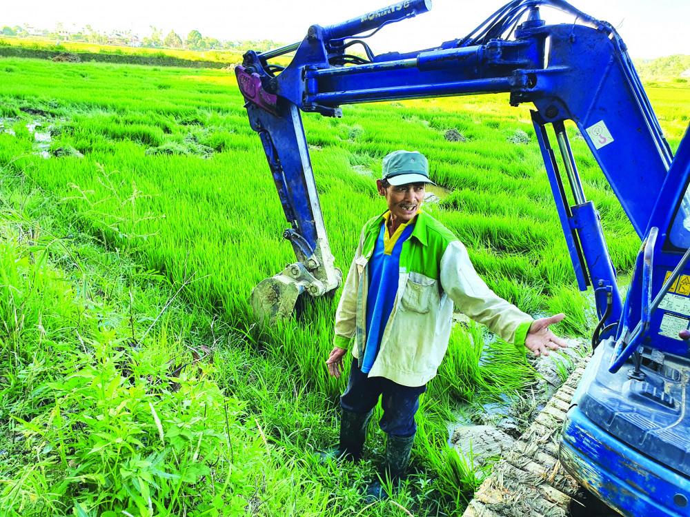 Ông Lê Minh Tâm xót xa bên ruộng lúa bị càn không thương tiếc