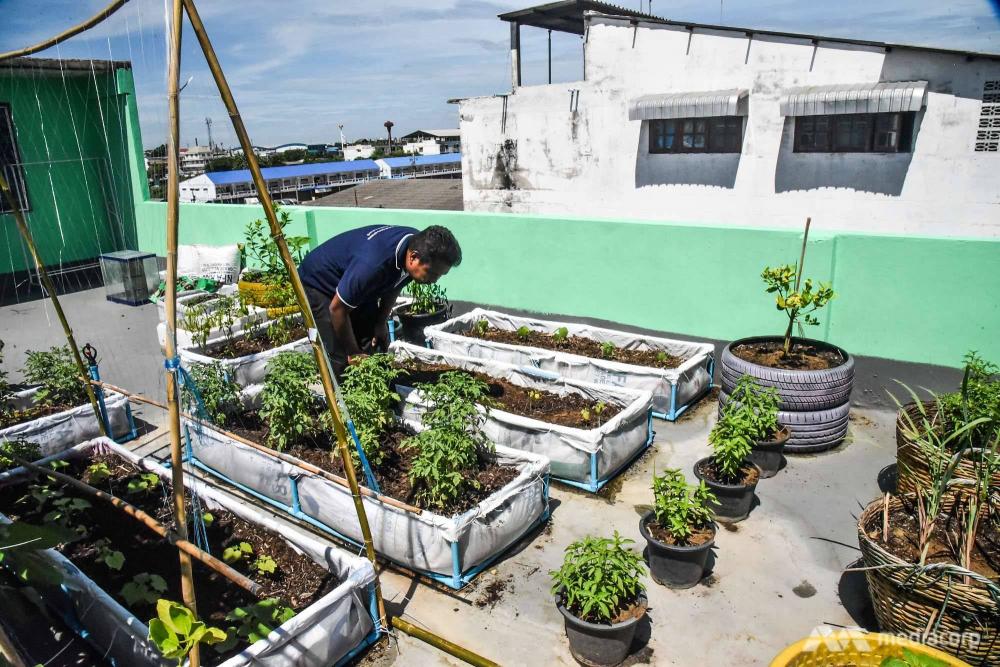 Khu vườn trên sân thượng ở Samut Sakhon tuy nhỏ nhưng hiệu quả và là một động lực cho cộng đồng địa phương - Ảnh: Jack Board