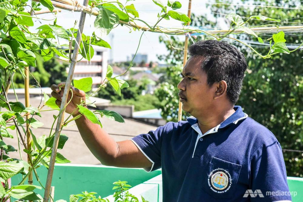 Ko Saw tìm thấy niềm vui khi học được nghề trồng rau trong khu vườn trên sân thượng MWRN - Ảnh: Jack Board